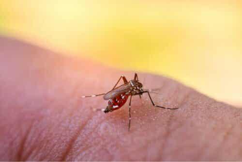 Κουνούπι ετοιμάζεται να τσιμπήσει