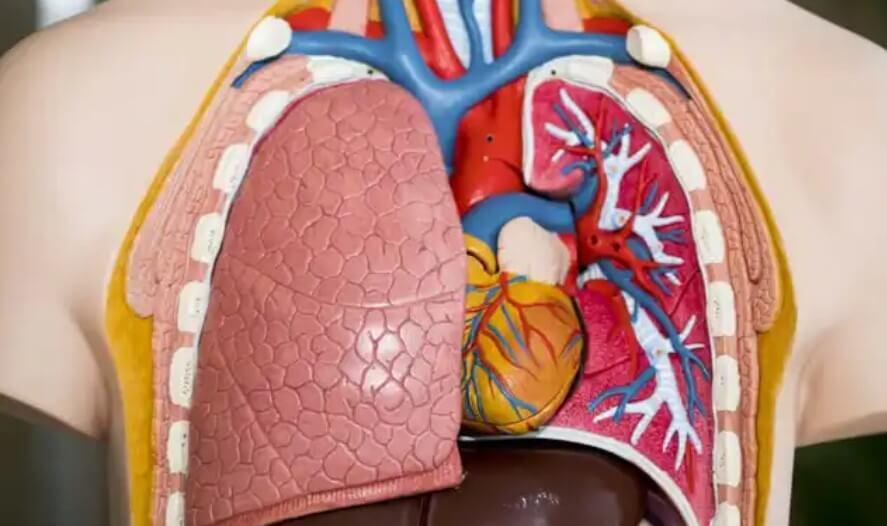 πλαστικοί πνεύμονες