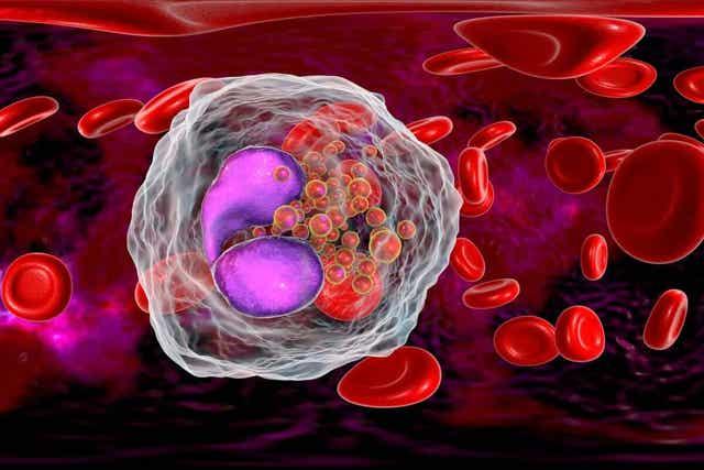 Ψηφιακή απεικόνιση κυττάρων