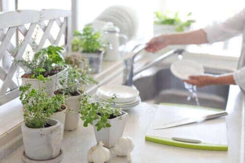 5 οφέλη του να έχετε φυτά στην κουζίνα
