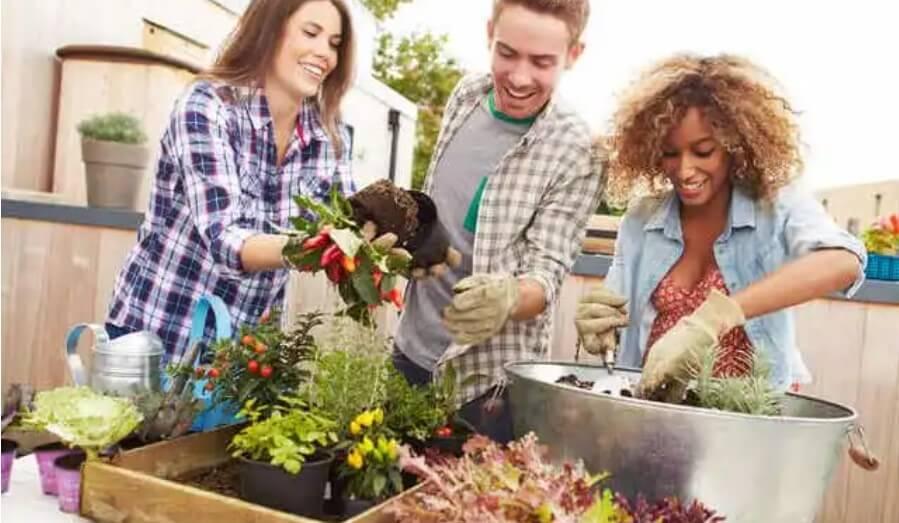 φίλοι και κηπουρική