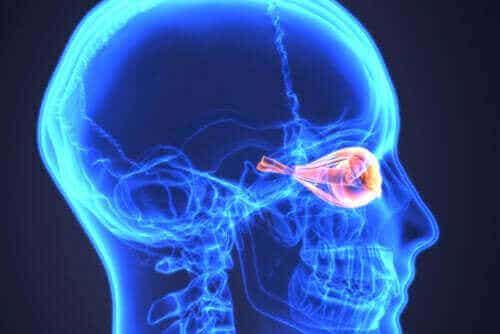 Οπτική νευρομυελίτιδα ή νόσος Devic: Τι είναι;