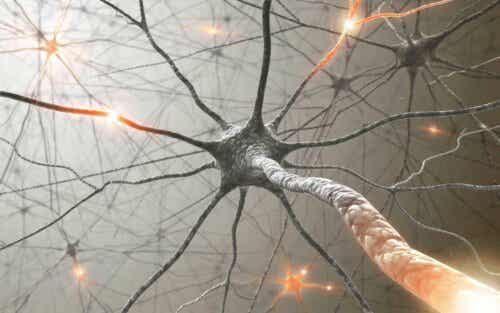 Ψηφιακή απεικόνιση νεύρων