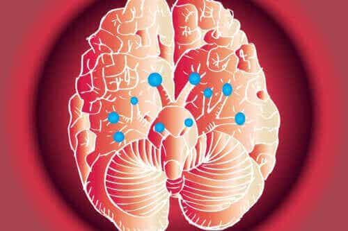 Τα 12 κρανιακά νεύρα: Ποιες είναι οι λειτουργίες τους
