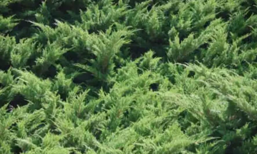 φυτά για σκια