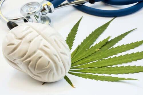 Οι επιδράσεις της κάνναβης στον εγκέφαλο