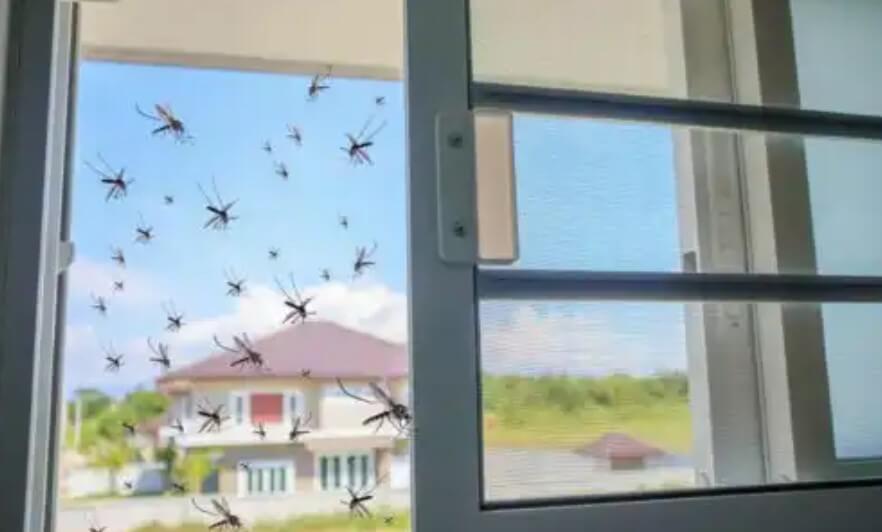 κουνούπια σε παράθυρο